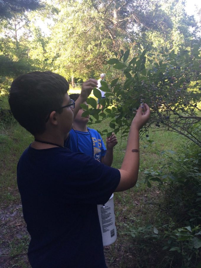 boys picking blueberries
